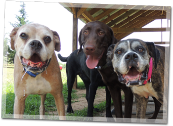 Sheba's Doggy Day Care - Where every dog is a happy camper!