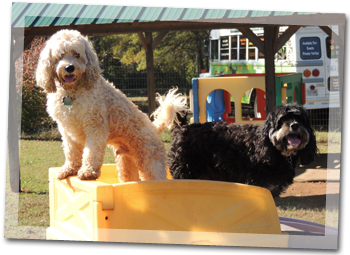 Our philosophy at Sheba's is that all doggy campers should enjoy hours of off leash fun while boarding.