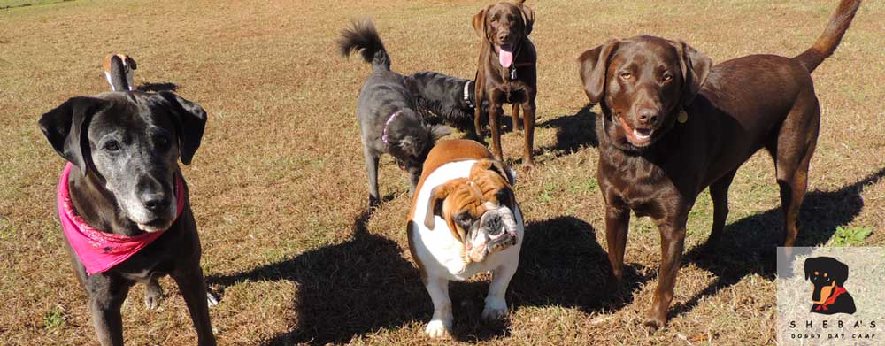 Is Your Favorite Canine A Good Candidate For Doggy Day Care?